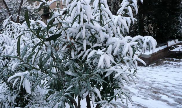La nieve en polvo sobre los árboles y arbustos