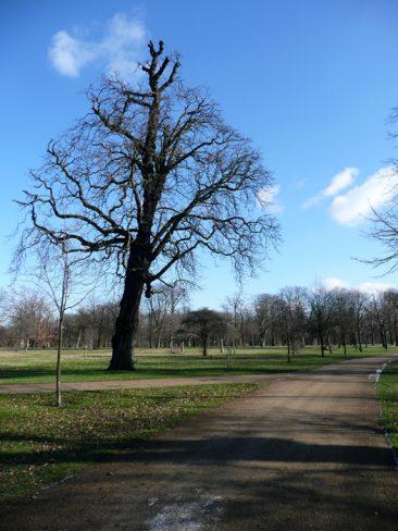 Árbol soleado de Kensington Park
