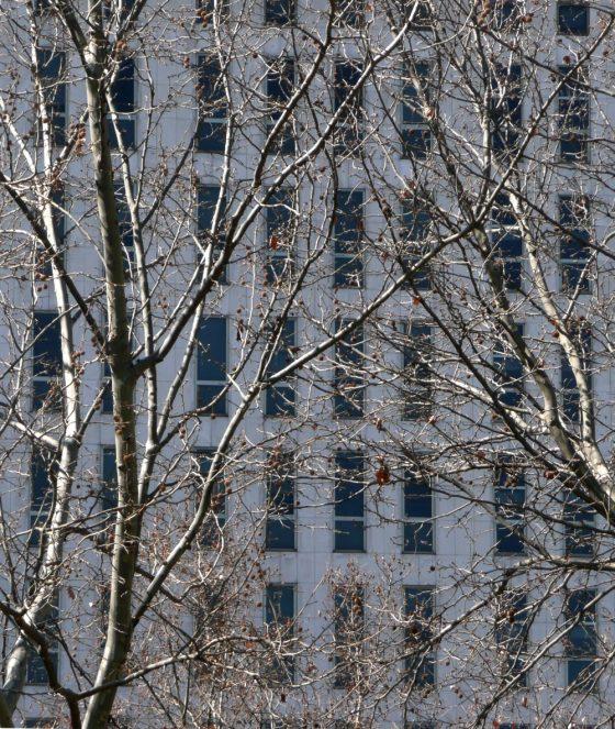 Fachada tras ramas