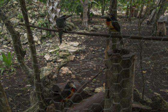 Tucanes en San Juan de Dios