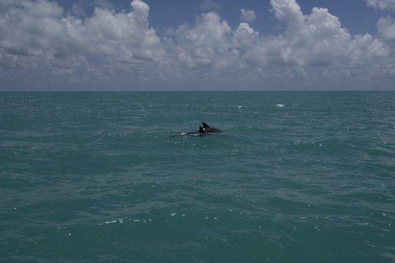 Delfines!!! en Sian Ka'an
