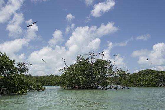 Sian Ka'an. Manglar de Cayo Culebra