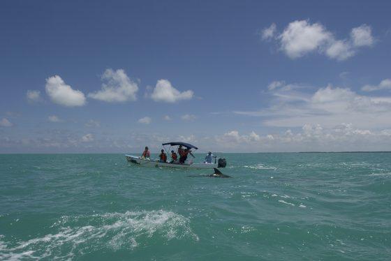 Sian Ka'an. Delfines jugando con las lanchas