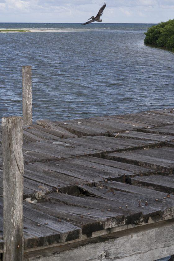 Pelícano y puente de madera hacia Punta Allen