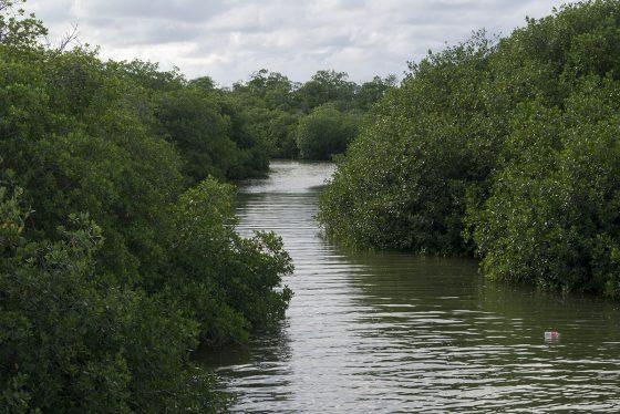 Sian Ka'an. Vista de la laguna entre manglares