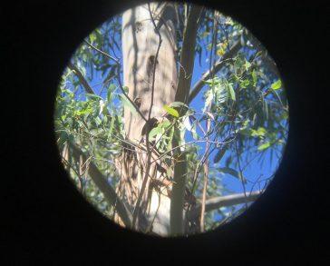 De observación, en busca y captura